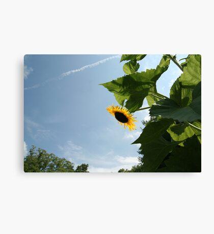 Skyscape with Sunflower Canvas Print