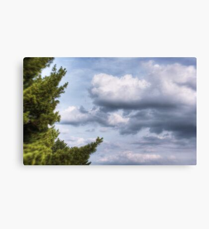 The Trees and Clouds Canvas Print