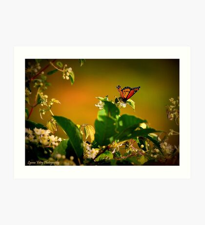 Oh Butterfly Art Print