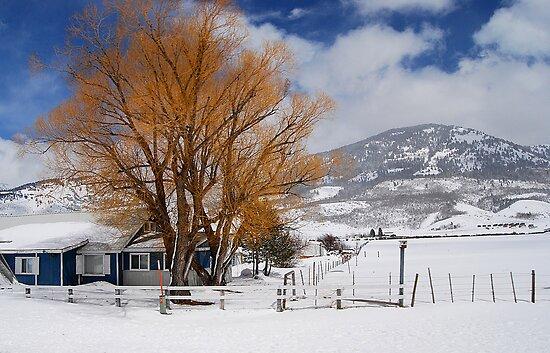 Outstanding in Orange - Snow Scene by Barbara Burkhardt