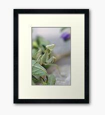 Say cheese ! Framed Print