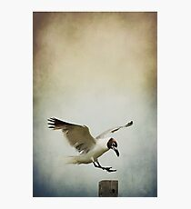 A Seagull's Landing Photographic Print