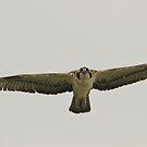 First flight by Carl LaCasse