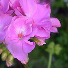 «Cierre de flores» de artbycaseylh