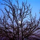Moon Through a Tree by Richard Skoropat