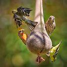 A Colorful Bunch by Ann J. Sagel