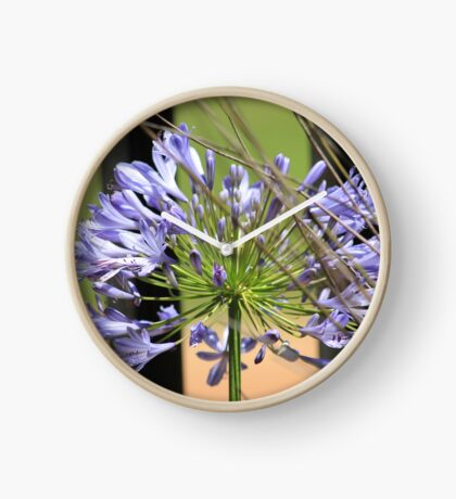 Agapanthus beauty Clock