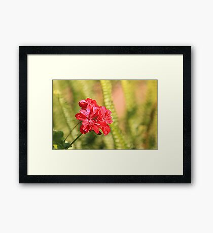 Perfect conditions to bloom Framed Print