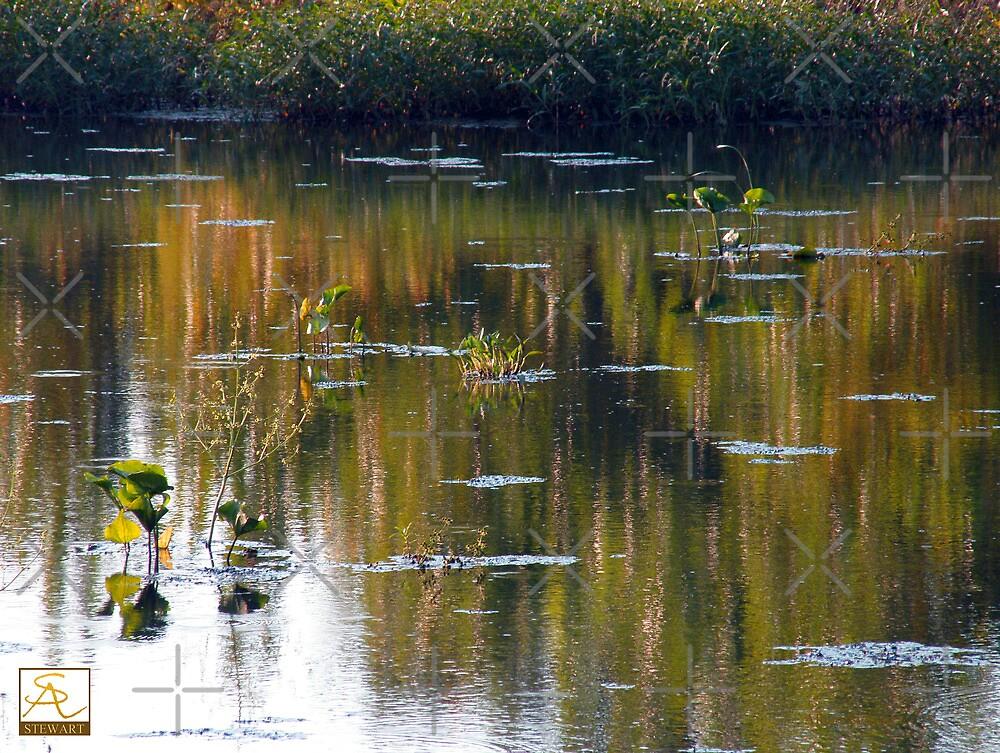 The Evening Pond by AlbertStewart