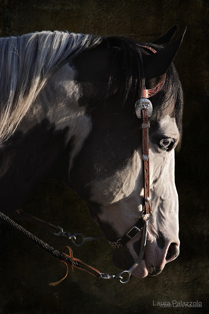 Max - Portrait of a Stallion by Laura Palazzolo