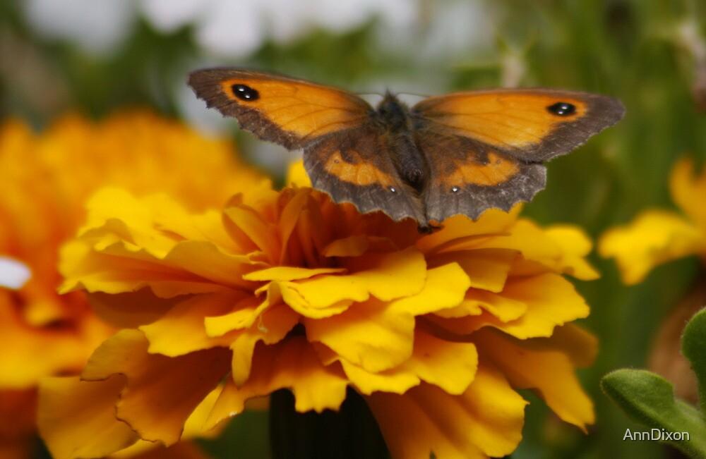 GateKeeper Butterfly by AnnDixon