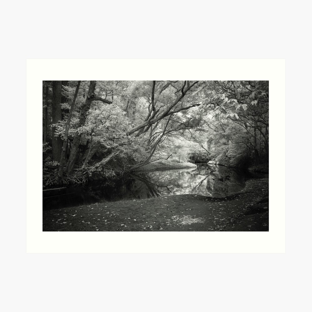 Reflecting infrared Art Print