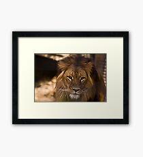Lion 2 Framed Print