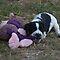 Tenacious Terriers.... Max 2/per day..