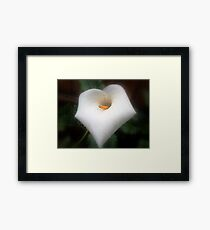 The morning dew and the unrelenting ants Framed Print