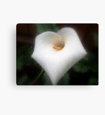 The morning dew and the unrelenting ants Canvas Print