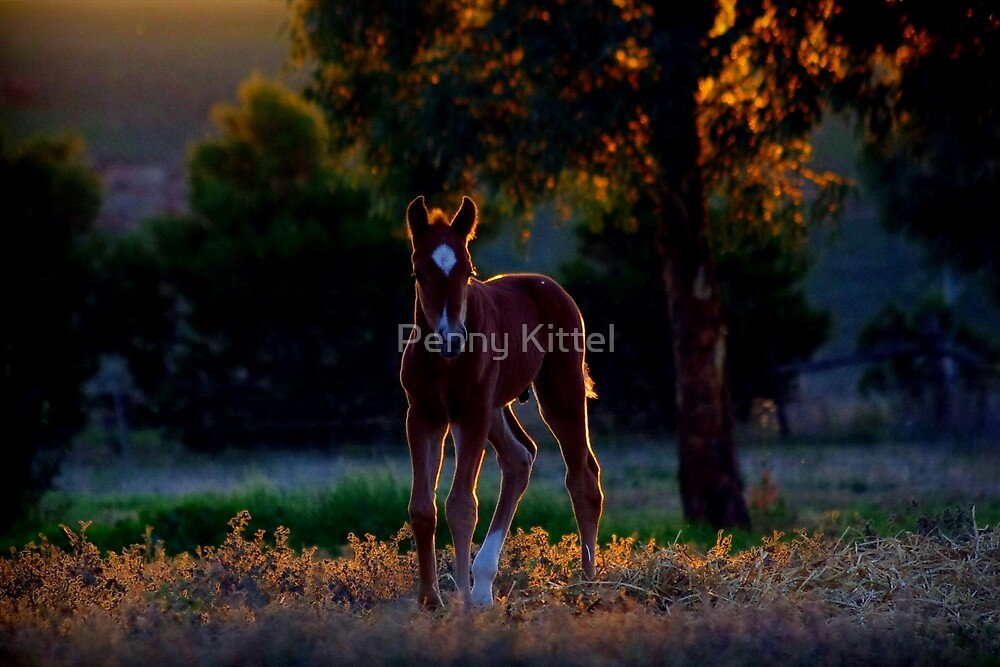 Evening foal by Penny Kittel
