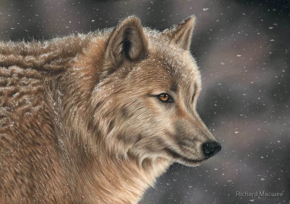Wolf In Snow by Richard Macwee