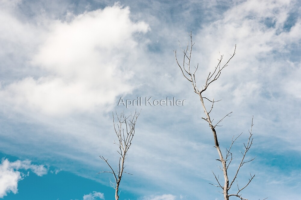 Two Tree Tops by April Koehler