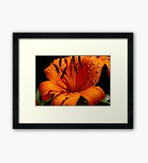 Orange Tigerlily Framed Print