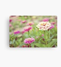 Zinnia patch Canvas Print