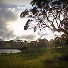 Flaxley Road, Flaxley, South Australia by Michael Humphrys