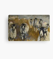 Stomping Swaledales Canvas Print