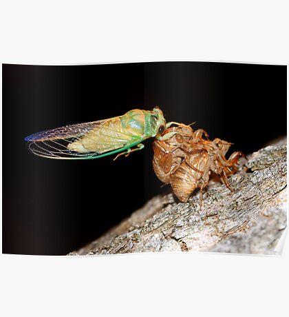 Cicada One Poster