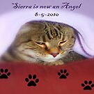 Sierra is now an Angel ©  by Dawn Becker