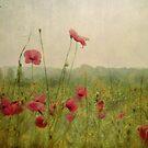 Poppies in the rain by Nikki Smith