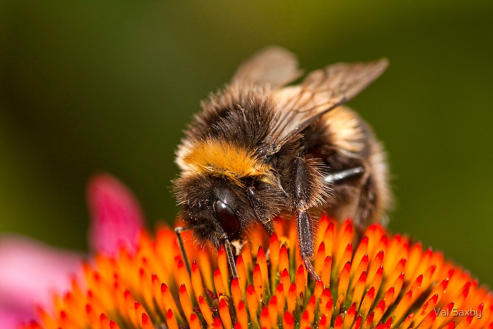 Busy Bee by Val Saxby