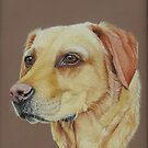 Tilly the Yellow Labrador by cathyscreations