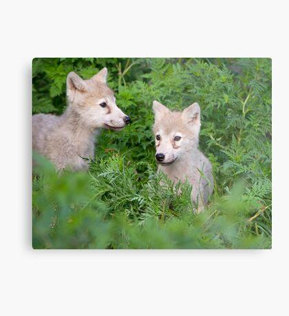 Cute pair  Metal Print