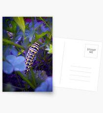 Blue Caterpillar Postcards