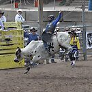 Bull Riding 4 Pikes Peak or Bust Rodeo by hedgie6