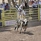 Bull Riding 6 Pikes Peak or Bust Rodeo by hedgie6