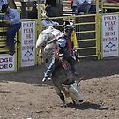 Bull Riding 9 Pikes Peak or Bust Rodeo by hedgie6