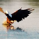 OUCH....  JUST MISSED IT ! THE AFRICAN FISH EAGLE by Magriet Meintjes