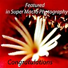 Banner for group Super Marco Photography by loiteke