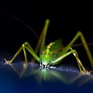 Grasshopper or Cricket? by Ben Porter