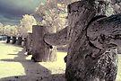 Woodhenge by Andrew Dickman
