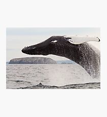 Humpback Whale Photographic Print