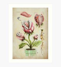 Piranha Plant Botanical Illustration Art Print