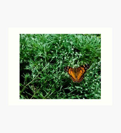 Butterfly On Green Art Print