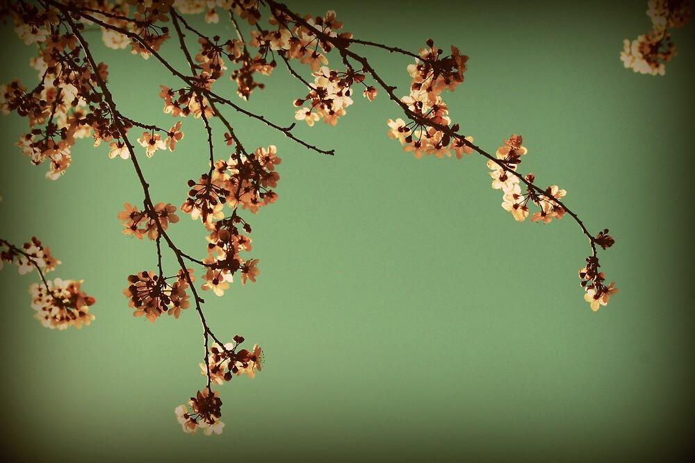 Elegance in bloom by Joshua Greiner