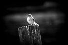 Lone bird by Joshua Greiner