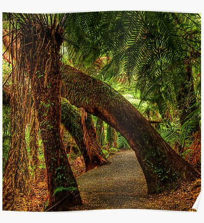 Tarra Valley Archway Poster