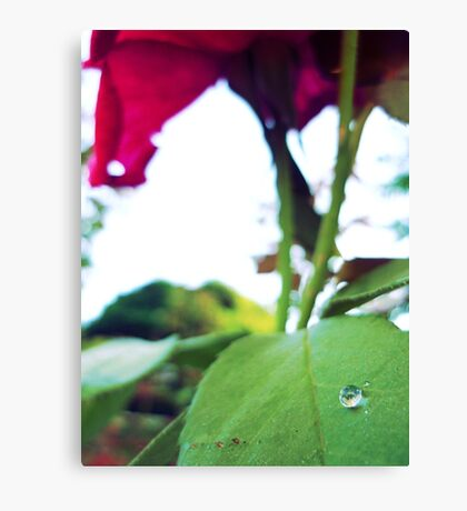 There's a hidden paradise in every rose... Canvas Print