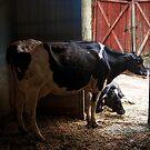 Dairy Farm by zzsuzsa