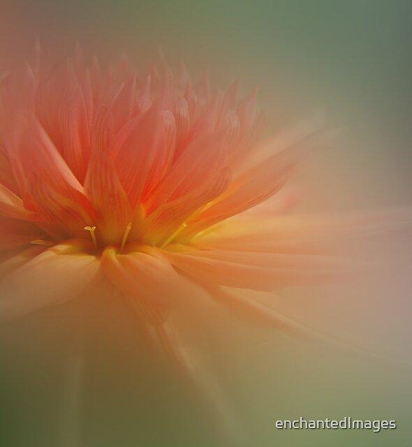 Dream Dahlia by enchantedImages